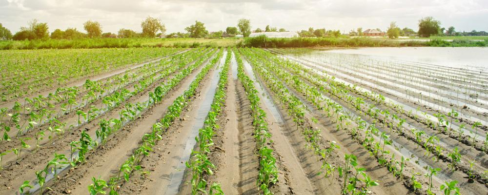 Michigan crop insurance litigation lawyer fights insurance companies for you
